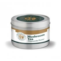 Golden Teacher Mushroom - Peppermint
