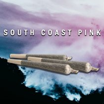 South Coast Pink (Pre Roll)